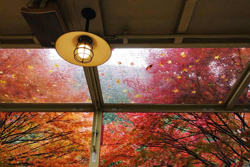 Shot inside an old train in autumn maples in Kyoto, Japan.
